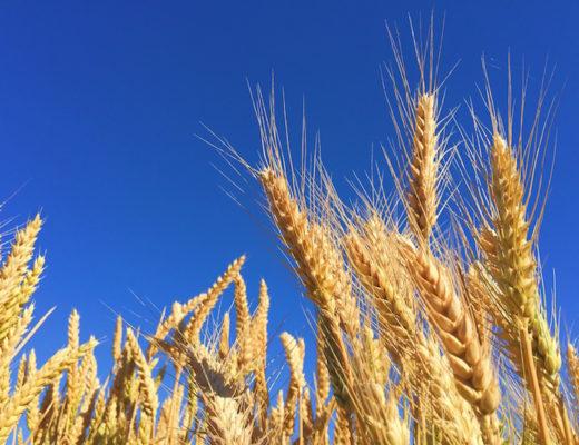 Ist Gluten ungesund? Wir berichten über Glutenunverträglichkeit, Clean Eating und was glutenfrei bedeutet. www.marinajagemann.com